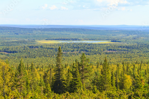 Foto auf Leinwand Forest river view from the mountain to the Scandinavian forests
