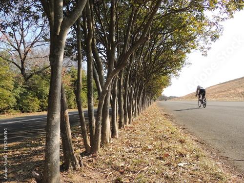 道満グリーンパークの並木道