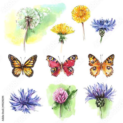 Foto op Canvas Bloemen vrouw Set of isolated elements of wild flowers and butterflies. Watercolor illustration