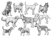 Dog Collection Illustration, D...