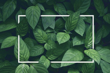 Creative Layout, Green Leaves ...