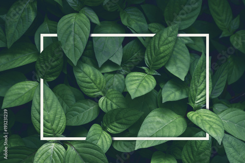 Poster Plant creative layout, green leaves with white square frame, flat lay, for advertising card or invitation