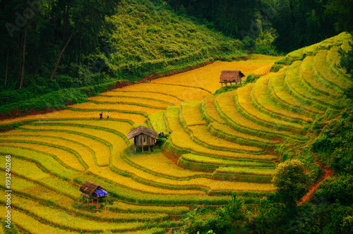 Terrace rice field at Mu Cang Jai, Vietnam.