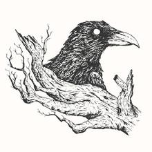 Black Raven And Old Tree Branc...