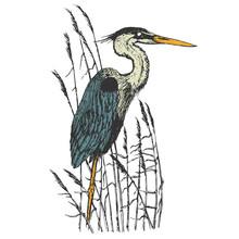 Heron In Vintage Engraving Sty...