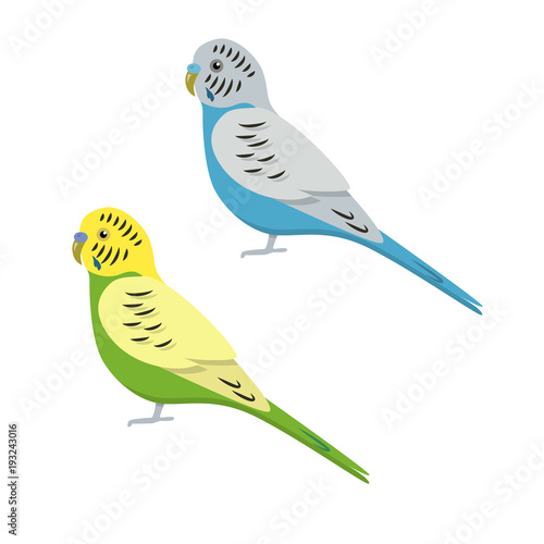 Budgerigar parrot icon in flat style Wallpaper Mural