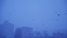 Flock Of Crows Flying Around A Building. Birds Fly In Winter Conditions