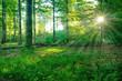Sonne strahlt durch grünen Wald, Spessart, Deutschland