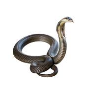 Cobra Isolate On White Backgro...