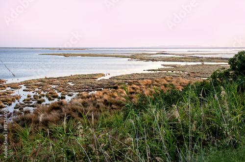 Yeşil ön alandan deniz manzarası. Poster