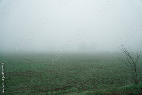 Poster Kaki Landscape of dense fog in the field and silhouette of trees in warm winter