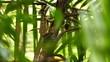 Common Basilisk (Basiliscus Basiliscus) on tree with spikes and leaves