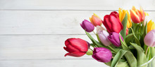 Colorful Tulips On White Backg...