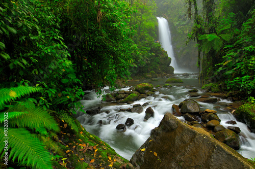 obraz lub plakat La Paz Waterfall Gardens, with green tropical forest, Central Valley, Costa Rica. Traveling Costa Rica. Holiday in tropic forest. River with white stream, rainy day, green vegetation, national park.
