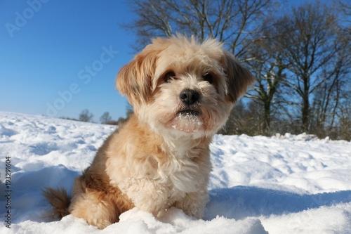 kleiner brauner mischling sitzt im schnee an einem sonnigen tag Fototapete