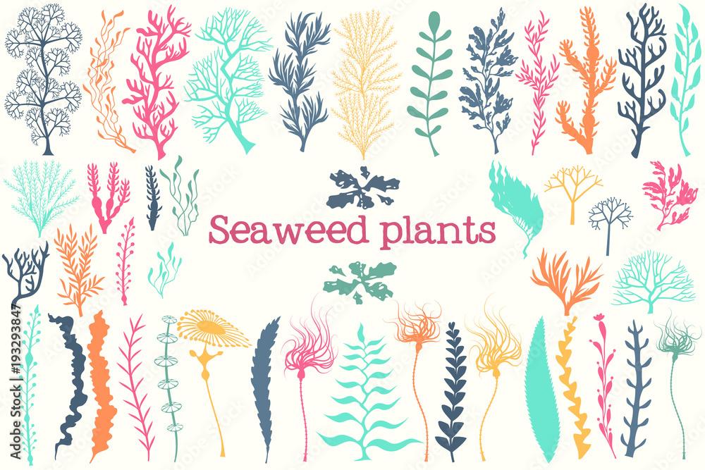 Fototapeta Sea plants and aquarium seaweed vector set.