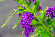 Purple flowers are a bunch of green backgrounds blurred