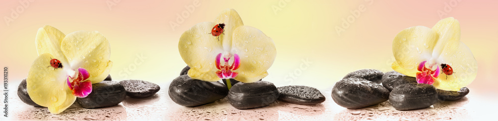 Yellow orchids and pebbles with ladybug. Panoramic image.