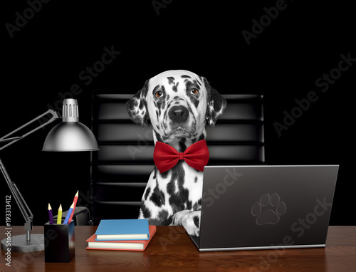 Fotografía  Cute dalmatian dog manager is doing some work on the computer