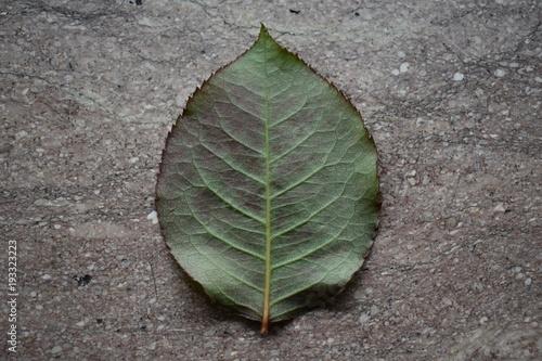 Fotografija  Leaf