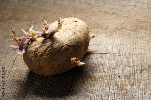 Sprouting potato, Solanum tuberosum on wooden background
