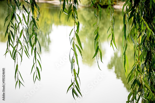 Foto auf Gartenposter Baume over river hang willow branches, bright summer day