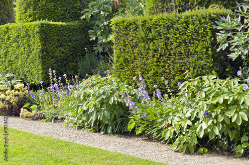 Trimmed yew hedge, flowering plants by a small stone path and lawn, in a summer English garden .