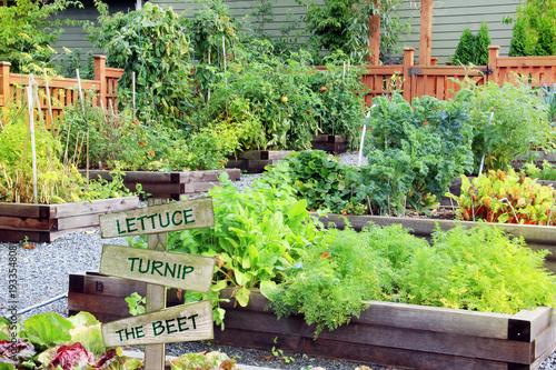 Grandma's fruit and vegetable garden. Canvas Print