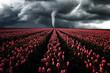 Tornado wütet über ein Tulpenfeld, Landschaft