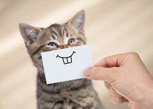Funny Cat With Smile On Cardbo...