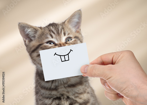 Foto funny cat with smile on cardboard