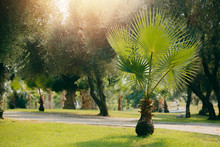Young Palm Park. Green Plants ...