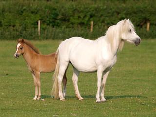 Pretty Mare and Foal