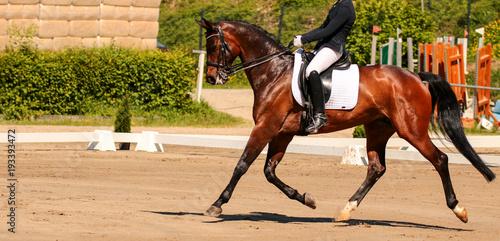 Foto op Canvas Paarden horse in dressage in different garden.