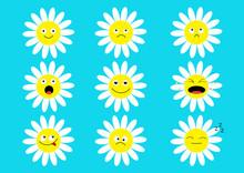 White Daisy Chamomile Icon Emo...