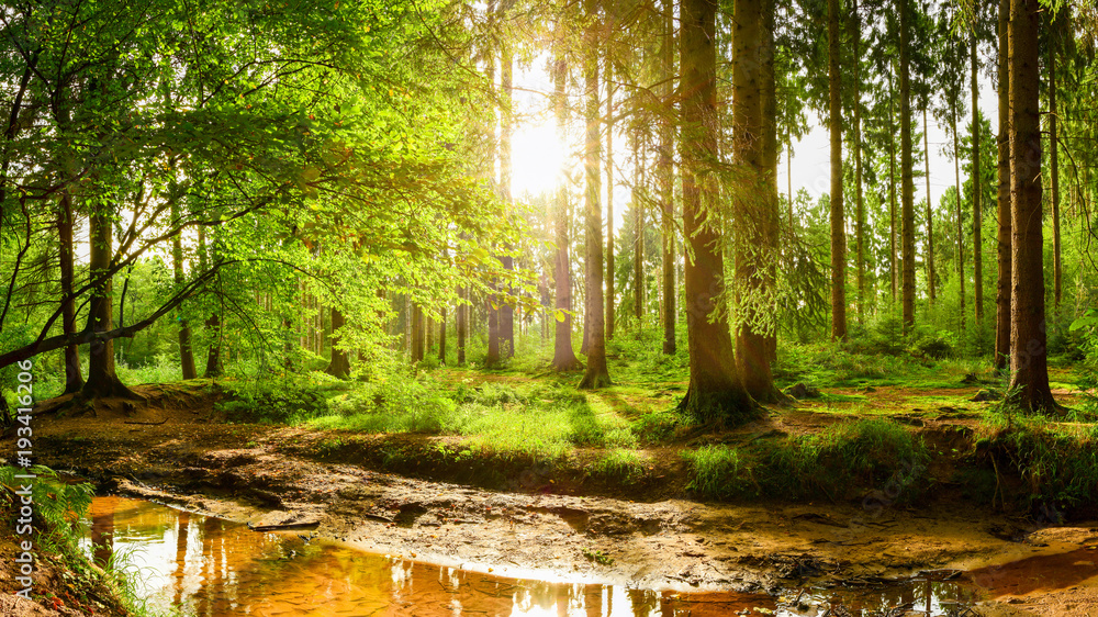 Fototapety, obrazy: Beautiful forest with bright sun shining through the trees