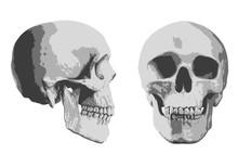Tête De Mort - Mort - Crâne ...