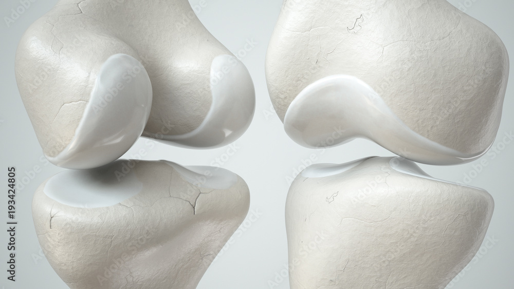 Fototapety, obrazy: Knee joint with healthy cartilage, front and back- 3D Rendering