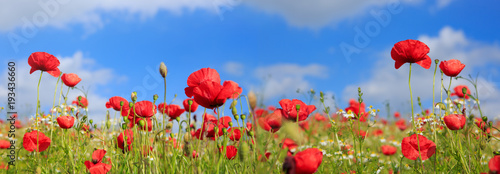 Foto op Canvas Klaprozen Poppies on sky background.