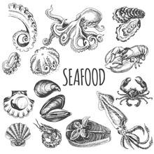 Vector Illustration Sketch - Seafood Set.