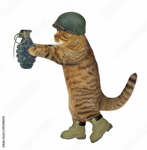 Fotografie, Obraz  The cat soldier in an army helmet is holding a real grenade