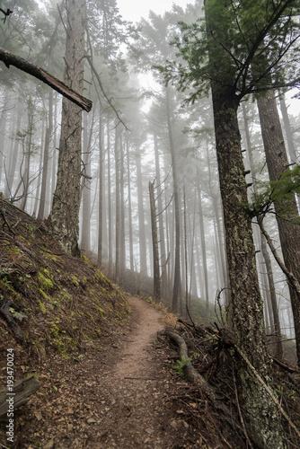 mglisty-lesny-szlak-w-gorach