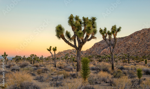 Photo  Joshua Tree National Park