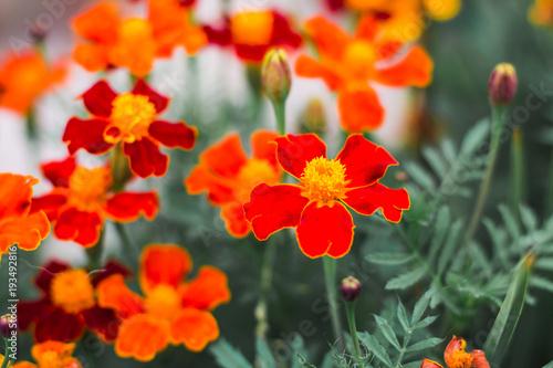 Foto auf Gartenposter Khaki Colorful flowers in nature in a summer