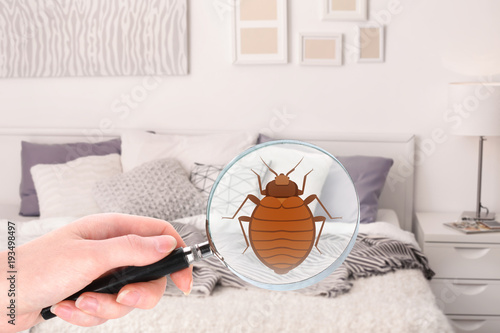 Fotomural Woman with magnifying glass detecting bed bug in bedroom