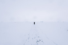 Lone Person Wandering Through A White Snowstorm With Tracks Of Footsteps In The Foreground