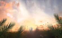 Palm Sunday Concept: Palm Leaves And Meadow Sunrise Background
