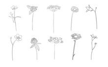 Hand Drawn Wild Flowers In Sum...