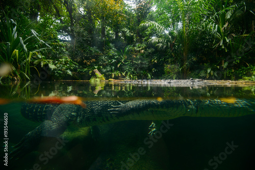 Foto op Plexiglas Krokodil Portrait of crocodile in the river.