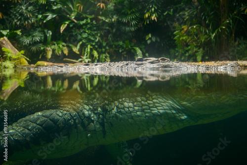 Foto op Plexiglas Krokodil Portrait of crocodile in the river.
